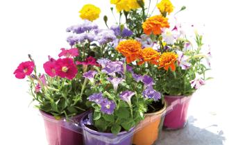 Vaschetta fiori biologici